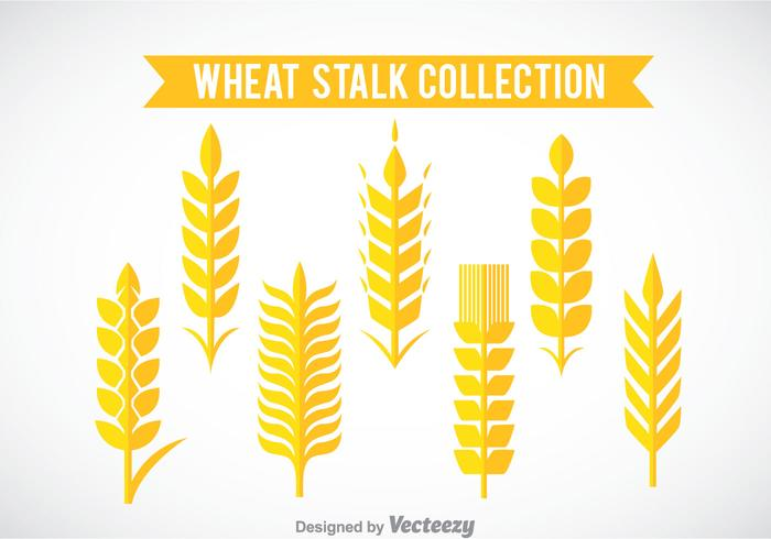 Wheat Stalk Collection Vector