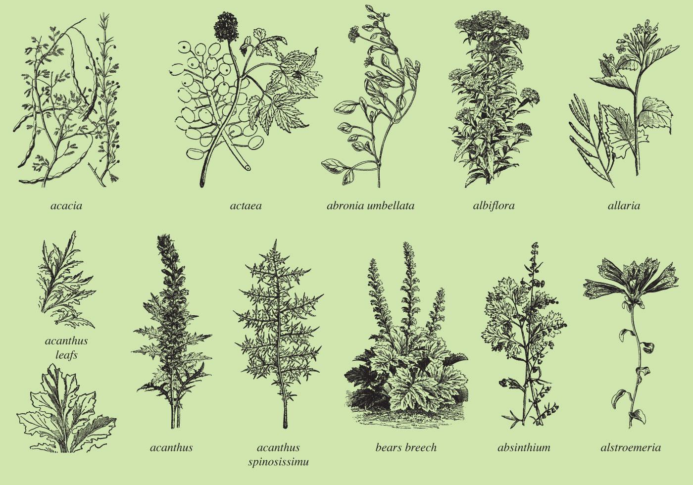 Medicina y plantas ornamentales descargue gr ficos y for Tres plantas ornamentales