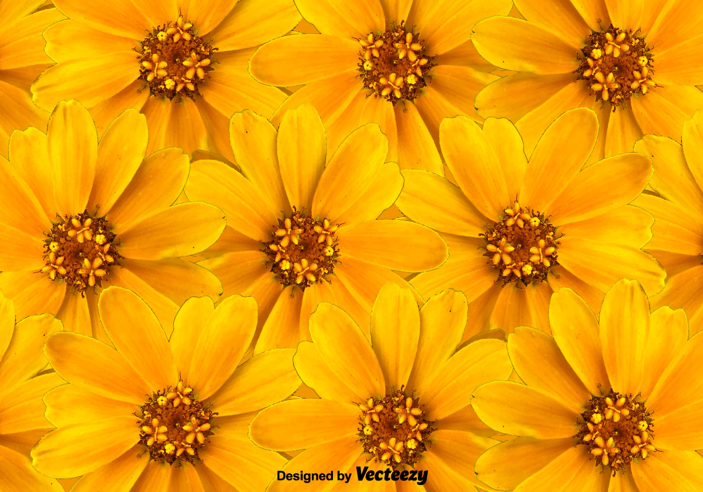 Vector Yellow Flowers Background Download Free Vector Art Stock