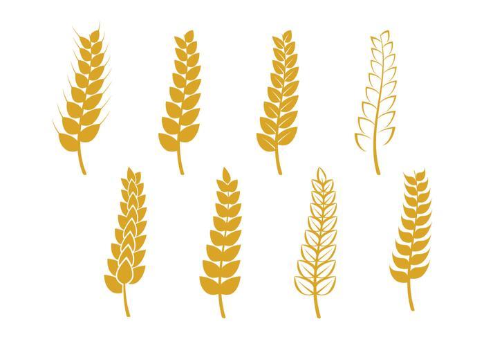 Wheat Stalk Icon
