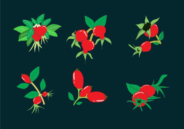 Rosehip Illustration Vector