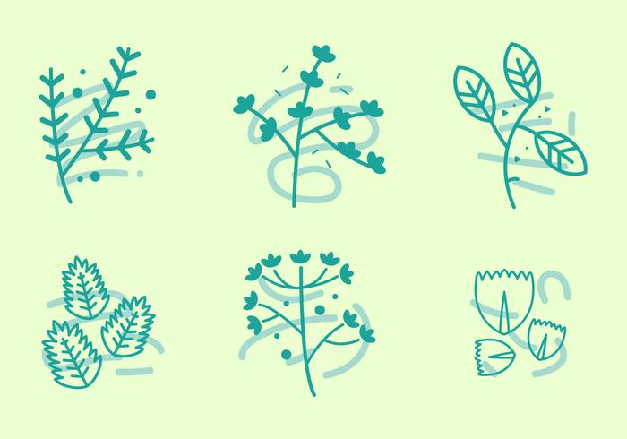 Free Thyme Vector Graphic 1