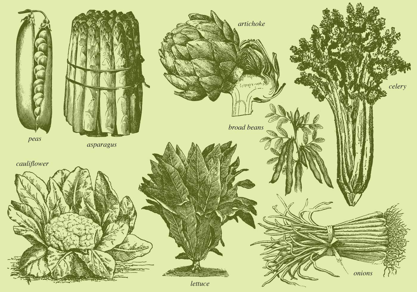 D Line Drawings Vegetables : Old style drawing vegetables download free vector art
