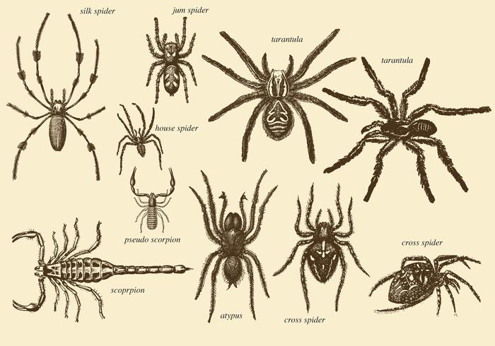 Old Style Drawing Arachnids