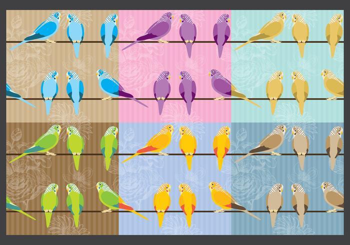 Budgie Bird Vector Backgrounds