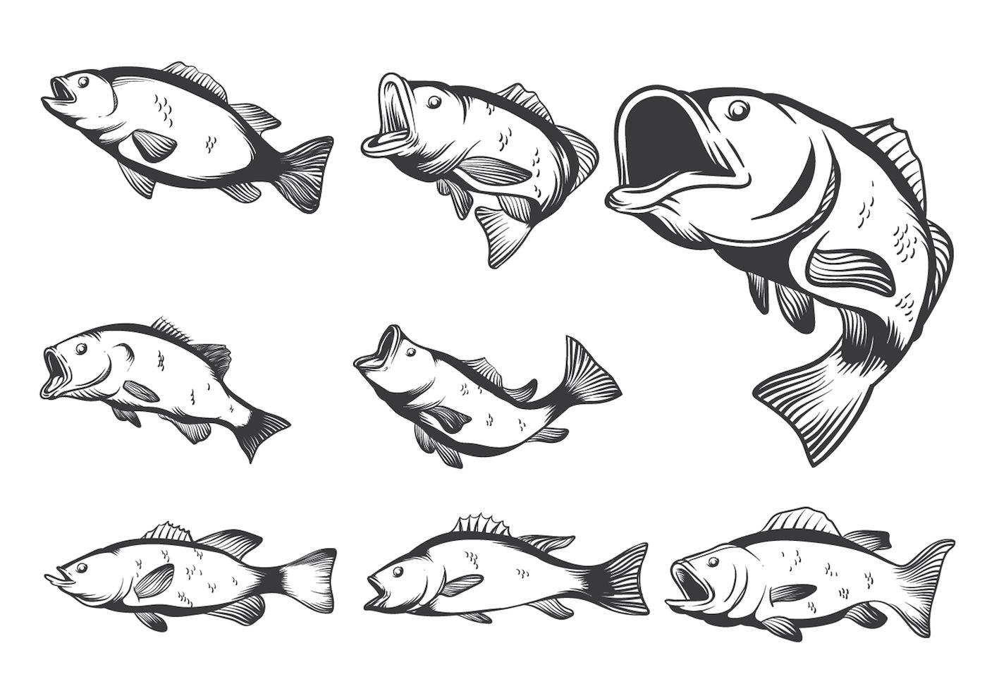 Bass Fish Vectors Download Free Vector Art Stock