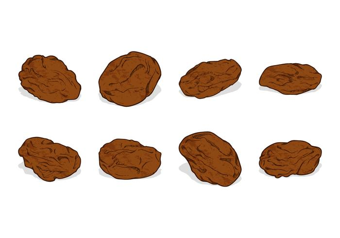 Hand Drawing Raisins Vector