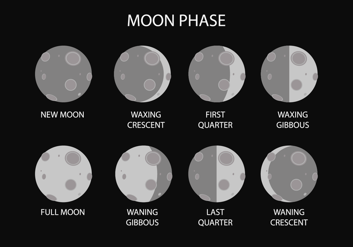 Free Moon Phase Vector