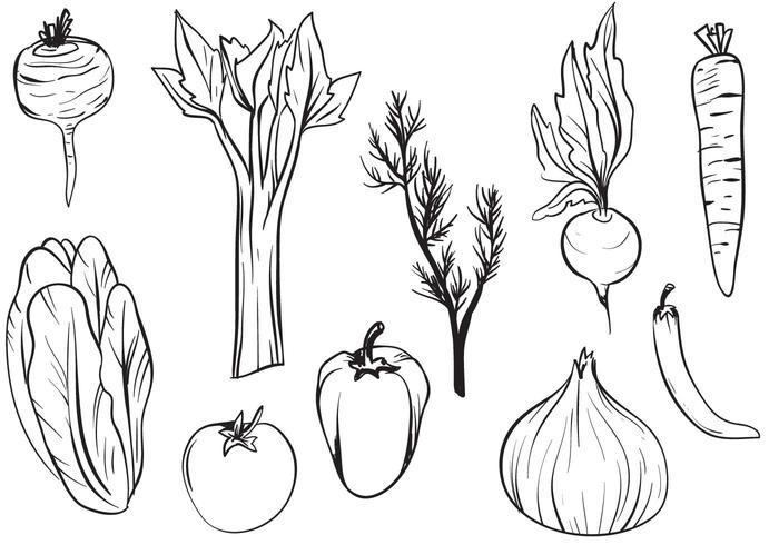Vecteurs de légumes dessinés à la main