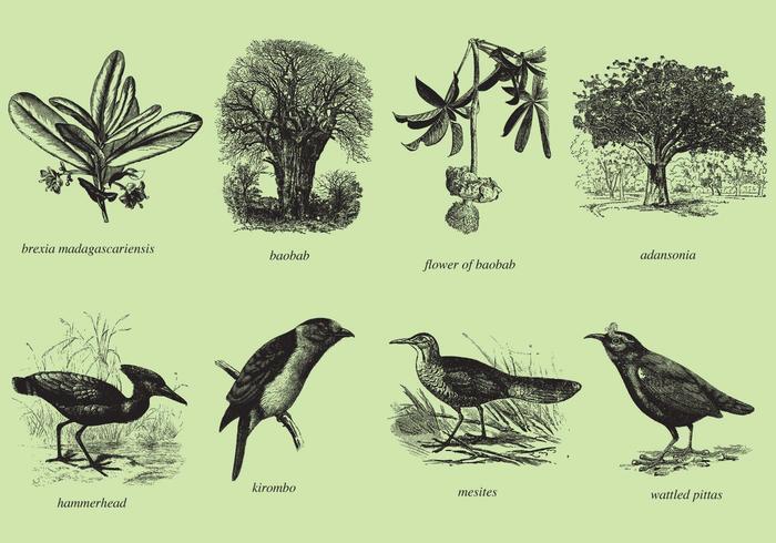 Alberi e uccelli del Madagascar