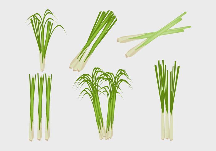Lemongrass ilustración vectorial