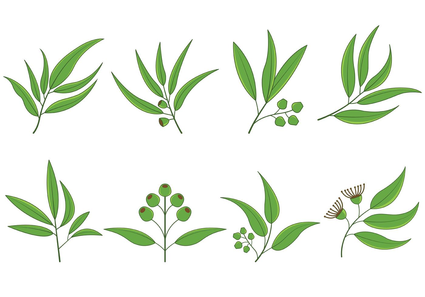 set of eucalyptus vector download free vector art stock