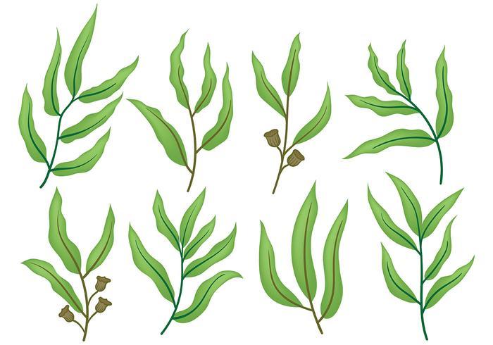 Libre de iconos de eucalipto Vector
