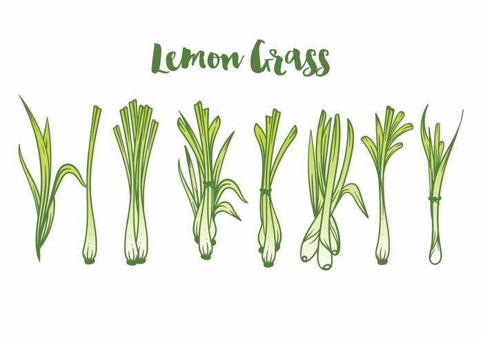 Conjunto de iconos de hierba de limón
