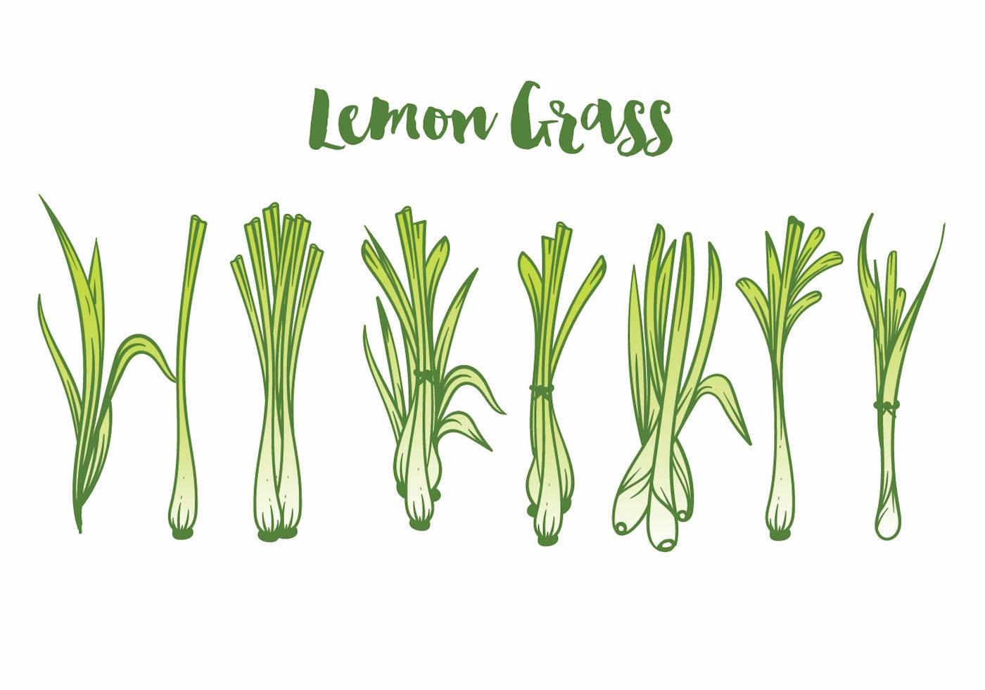 Lemon Grass Icon Set Download Free Vectors Clipart Graphics Amp Vector Art