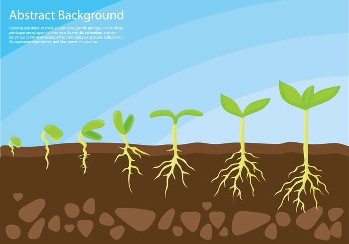 Plant Grow Up Concept Vector