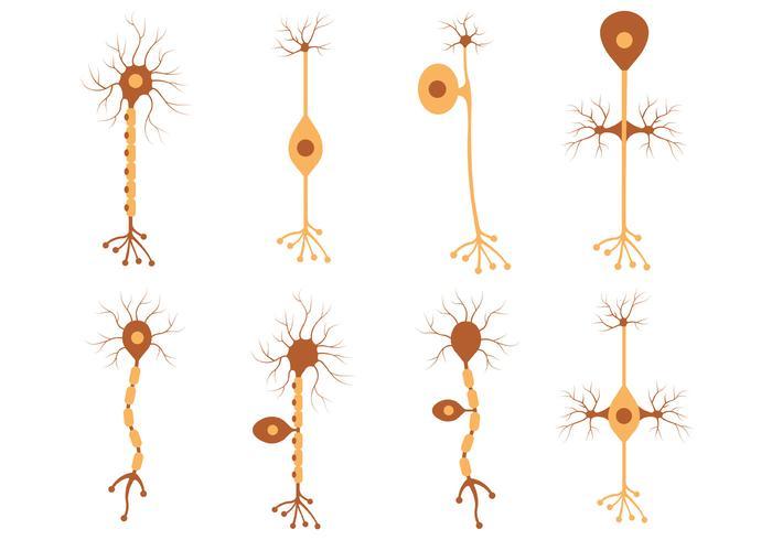 Set Of Neuron Vector