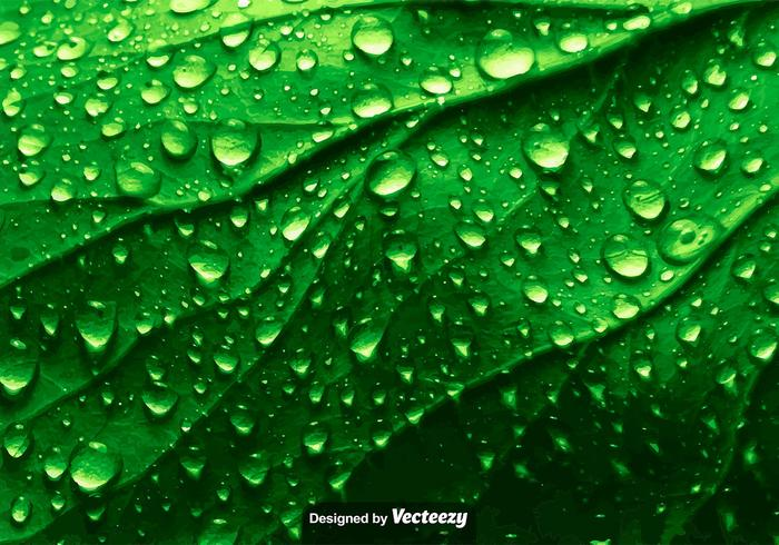 Realistic Green Leaf Texture With Water Drops - Vector