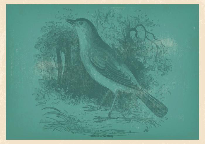 Vinatge Nightingale Illustration