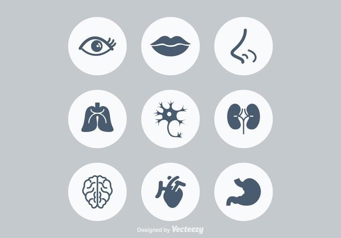 Free Human Anatonomy Vector Icons