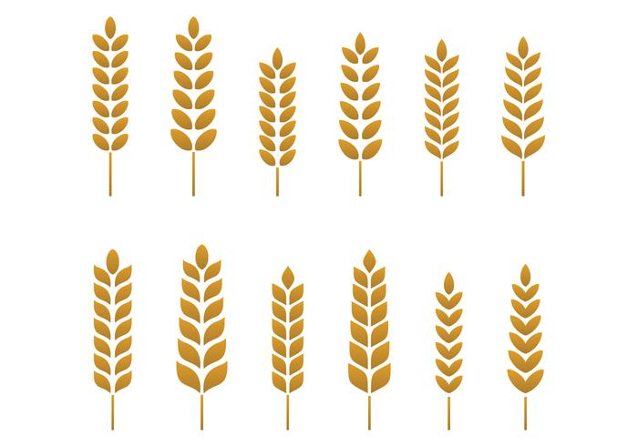 wheat free vector art 3150 free downloads rh vecteezy com wheat vector logo wheat vector psd