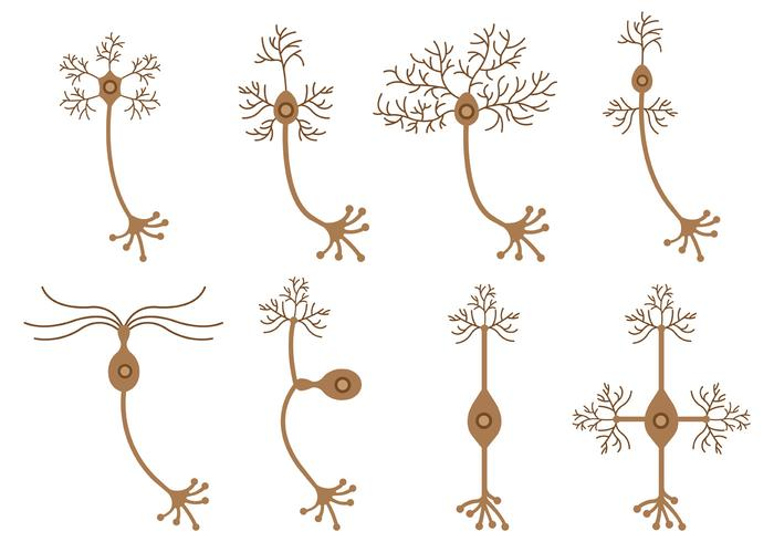Set Of Neuron Vector