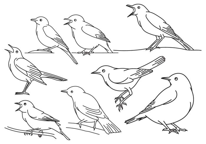 Nightingale Outline Set vector