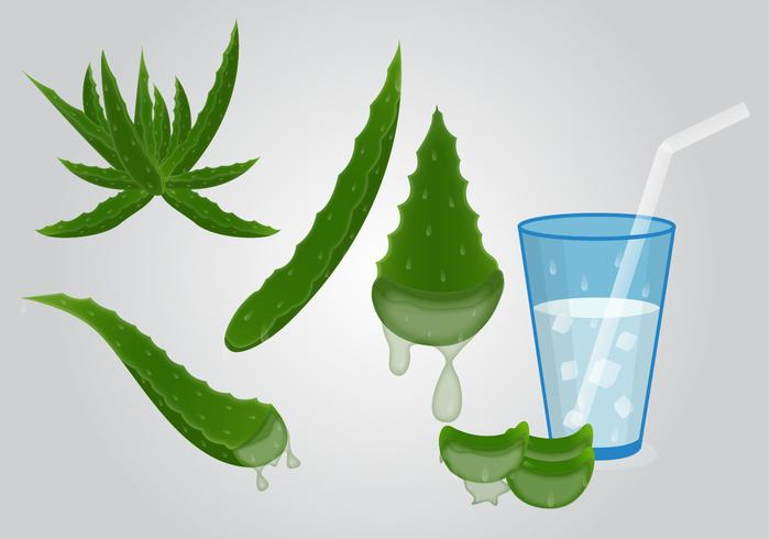 Fresh Healthy Maguey Drink Vector