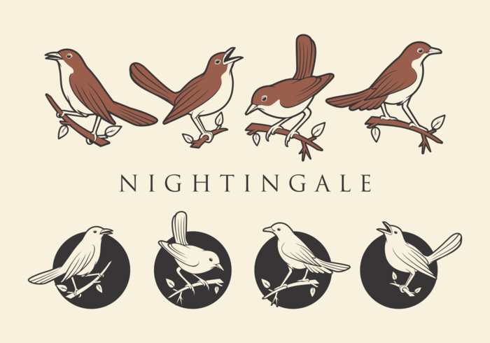 NIGHTINGALE VECTORS