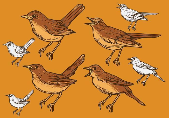 Nightingale Vector Set Illustration