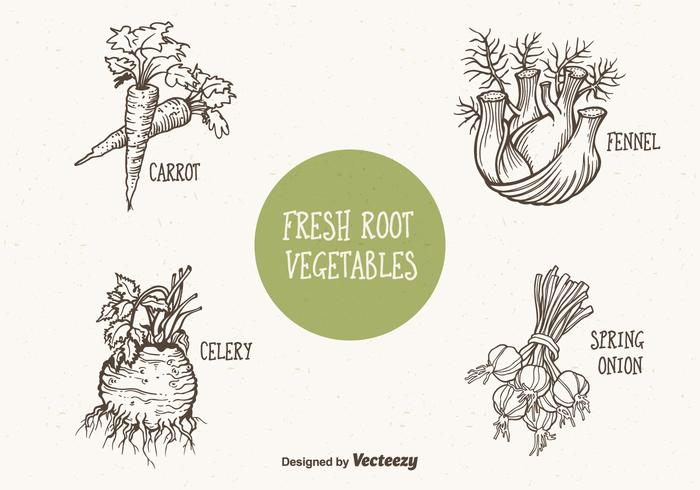 Doodle Drawn Root Vegetables Vector
