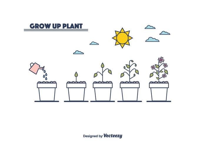 Plant Growth Cycle Vector