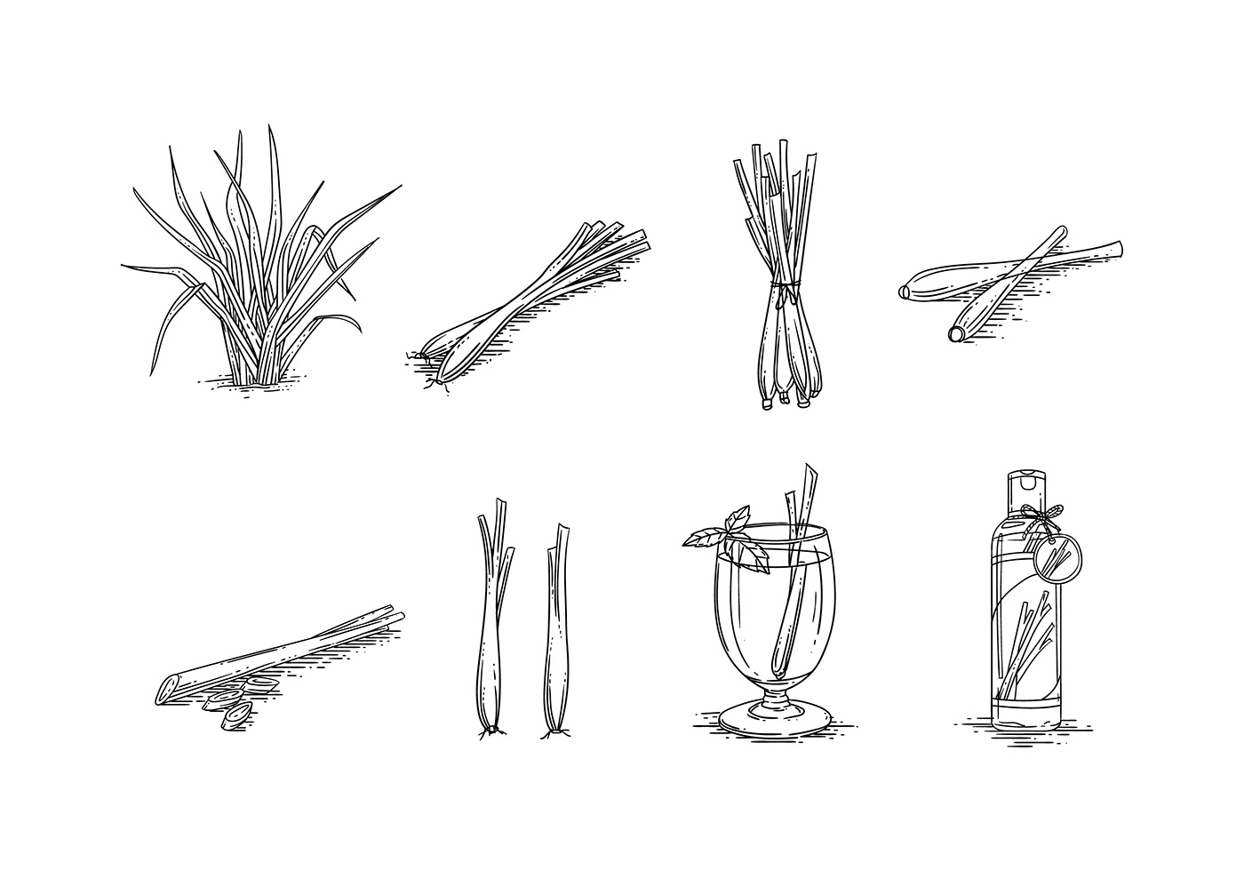 Lemongrass sketch vector free download free vector art for Sketch online free