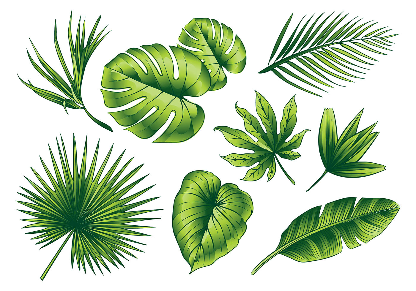 Palm PNG Images  Vectors and PSD Files  Free   Pngtree