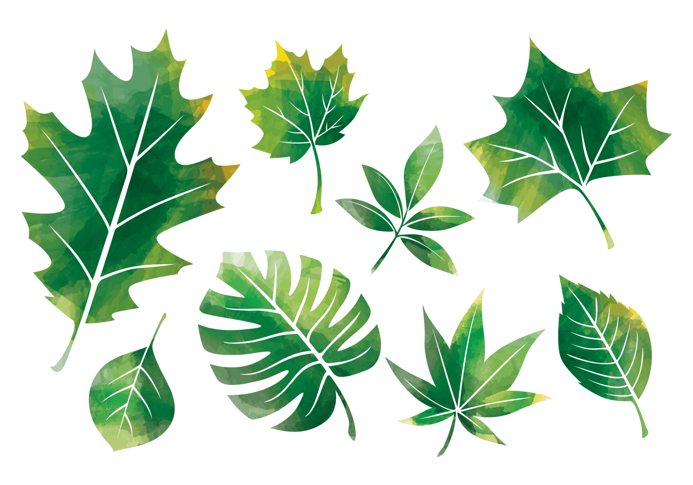 watercolor leaves free vector art 7651 free downloads