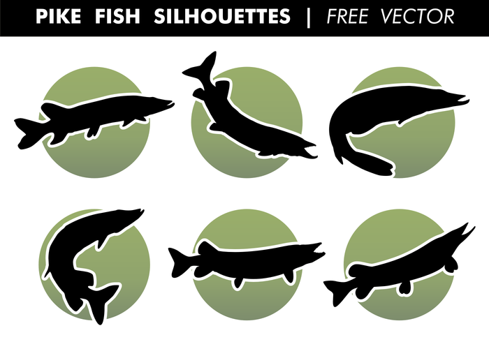 Pike Fish Silhouettes Free Vector