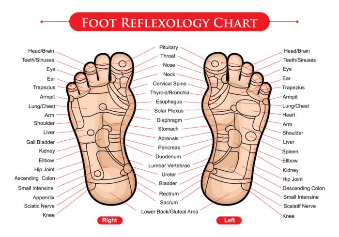 Vector de diagramme de réflexologie des pieds
