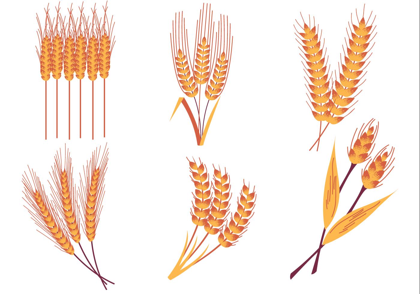 Wheat Stalk Free Vecto...