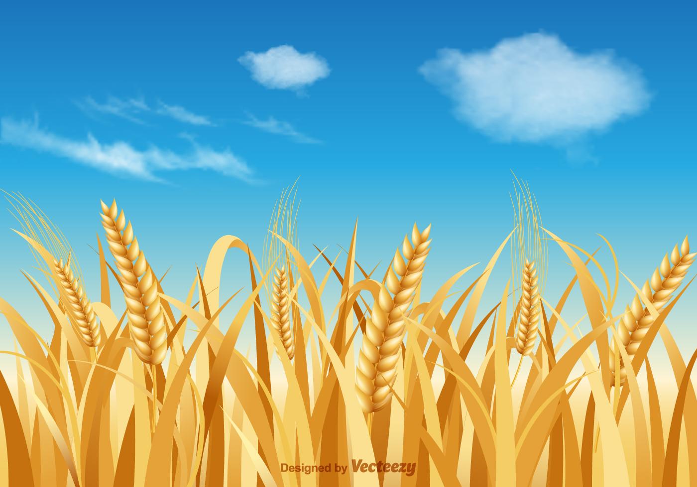 Wheat Stalk Vector Landscape Download Free Vector Art