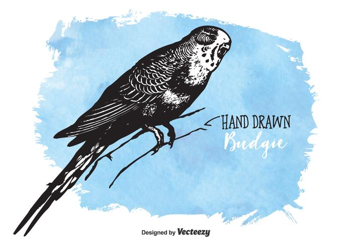Gratis Drawn Budgie Vector