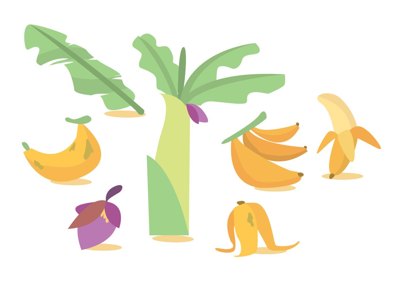 banana tree leaves vector - photo #14