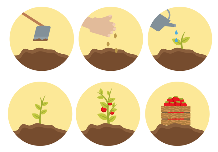 Free Plant Life Cycle Vector