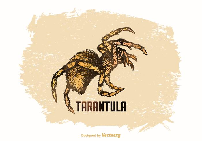 Free Vector Drawn Tarantula