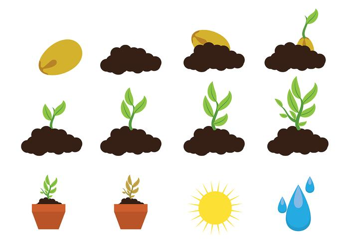 Grow Up Plant Icon Vector