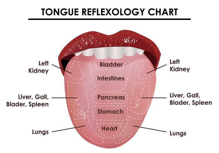 Tongue Reflexology Chart