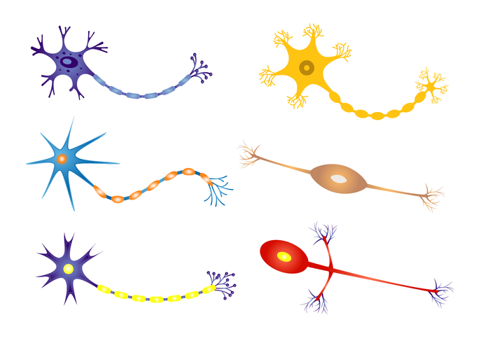 Free Neuron Vector