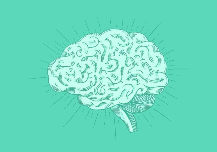 Brilhante mão desenhada cérebro vetor