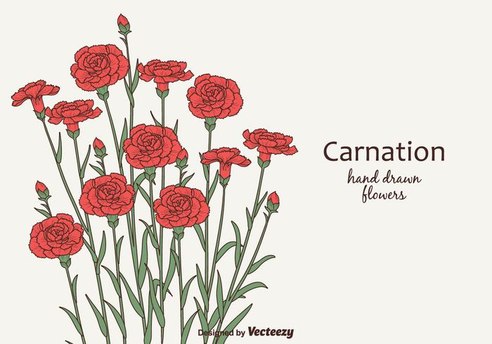 Free Vector Carnation Flowers