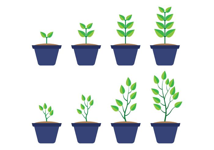 Grow Up Plant Vector