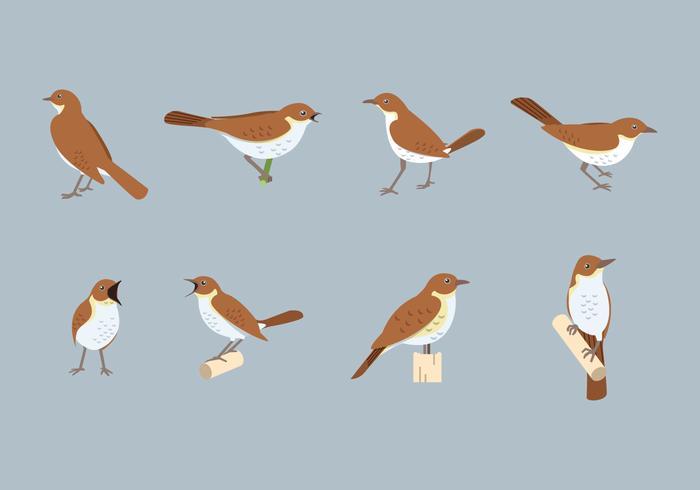 Free Nightingale Vector